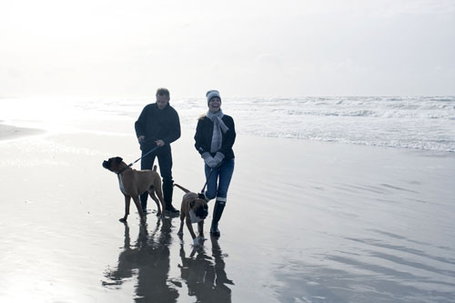 A walk on the beach with the dogs
